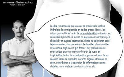 HIDRATOS DE CARBONO E INSULINA ¿CULPABLES DE QUE ENGORDEMOS?