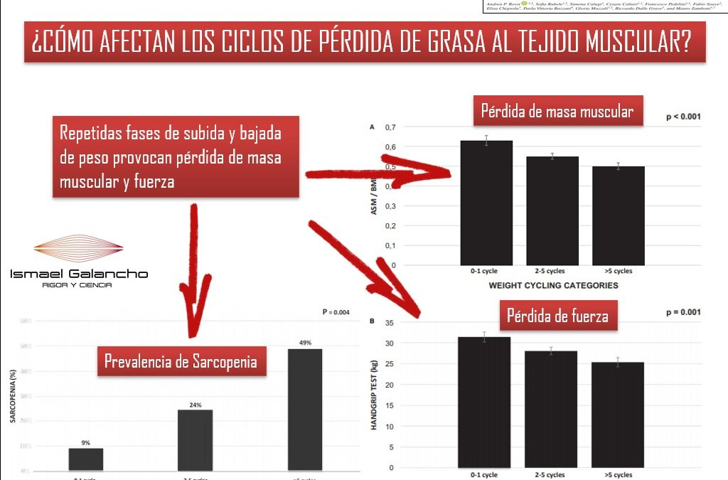 ¿CÓMO AFECTAN LOS CICLOS DE PÉRDIDA DE GRASA AL TEJIDO MUSCULAR?