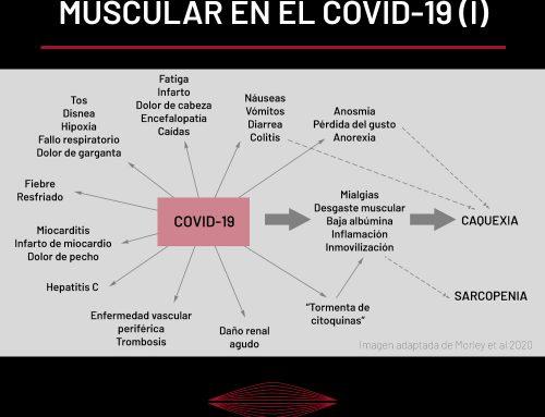 LA IMPORTANCIA DEL TEJIDO MUSCULAR EN LA PANDEMIA DEL COVID-19 (PARTE I)