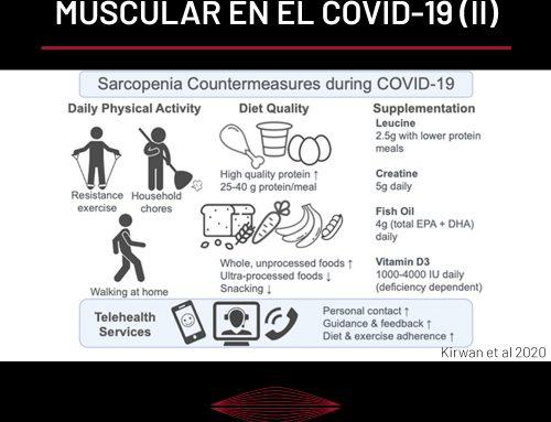 LA IMPORTANCIA DEL TEJIDO MUSCULAR EN LA PANDEMIA DEL COVID-19 (PARTE II)